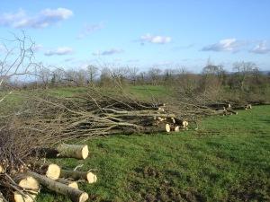4. andain de branches à dechiqueter